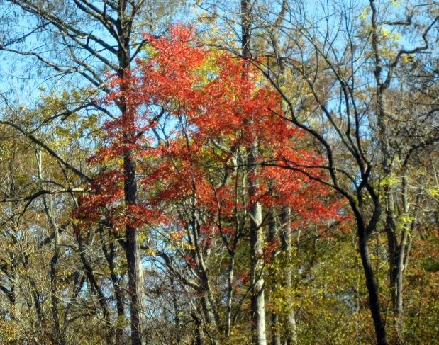 Dividing Creek CypressSwamp
