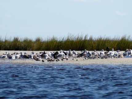 A diverse collection of birds on a beach