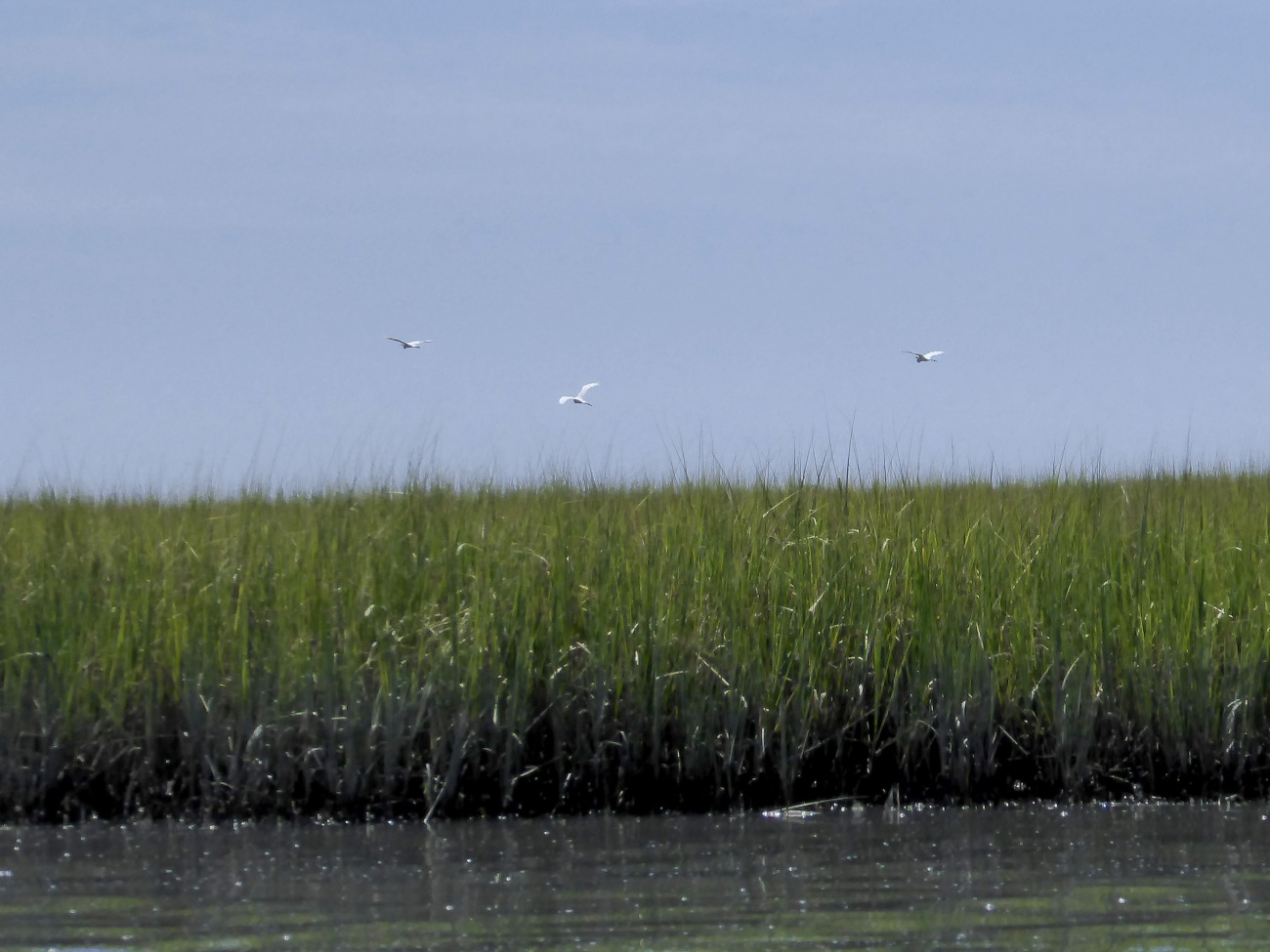 20170806_120935_Egrets on the move