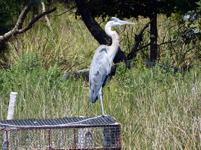 Heron on a cage