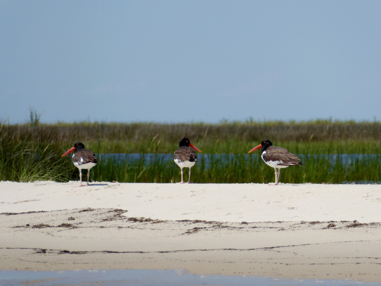 20170824_141705_Oyster Catchers