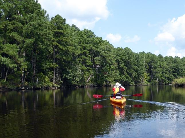 Wooded Creek Banks