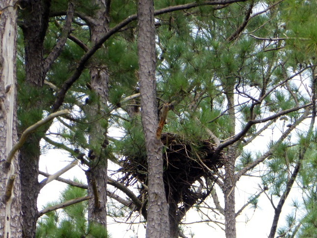 Eagle's Nest 1