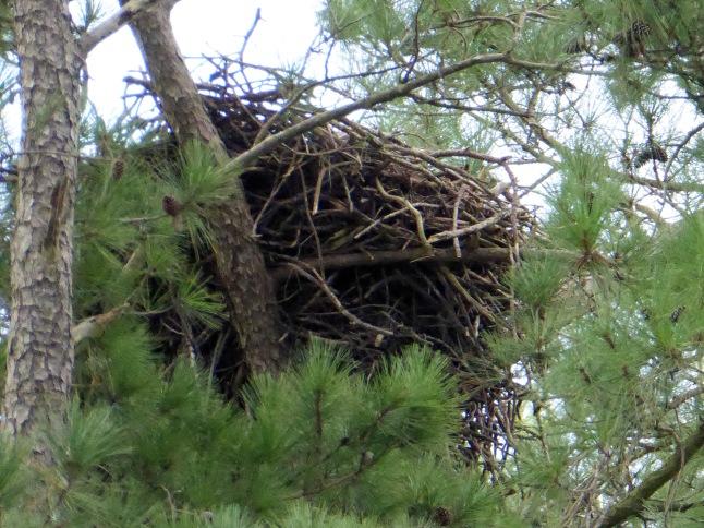 Eagle's Nest 2
