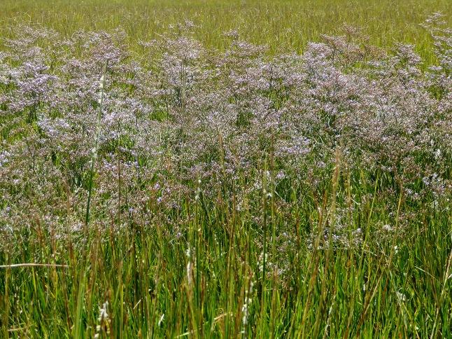 Purple flowers lining the shore