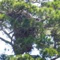 20170904_122913_Very Tall Eagle's Nest