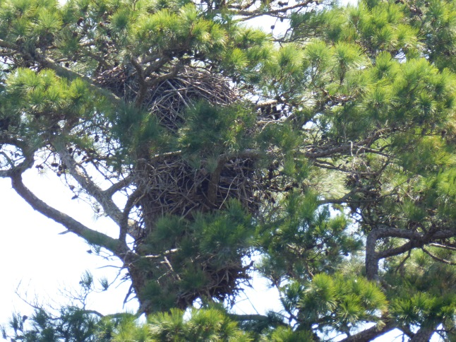 Very Tall Eagle's Nest