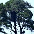 20170904_124525_Very Tall Eagle's Nest 2
