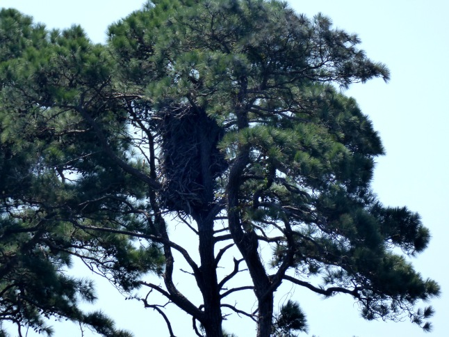 Distant View of Nest