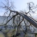20170904_143602_Dead Tree in the Water