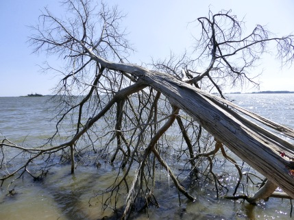 Dead tree reaching out into the water
