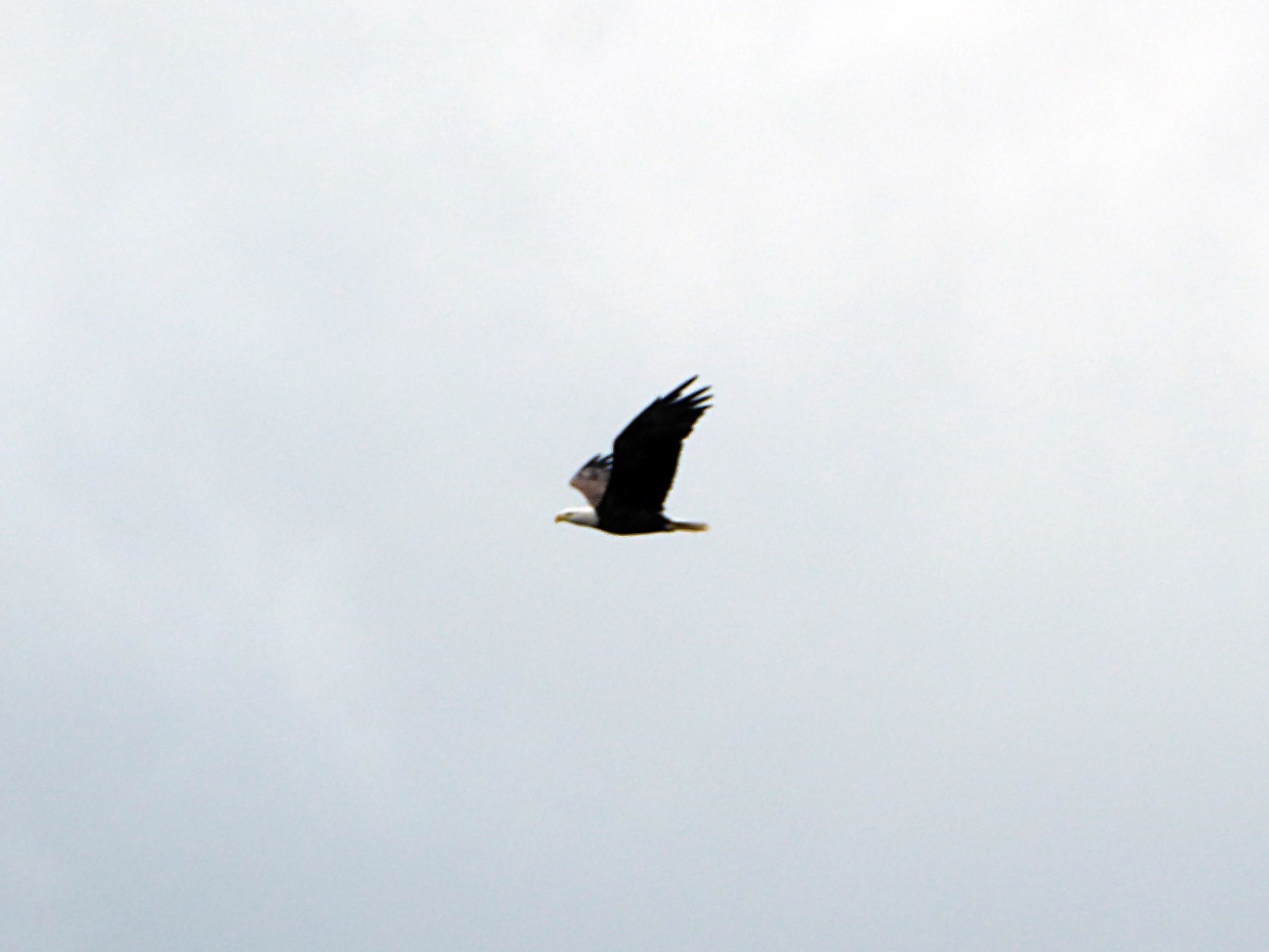 20170917_142230_Eagle Flyby