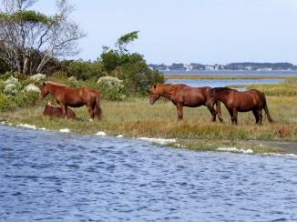 20171005_113334_Wild Ponies at Put-In Location