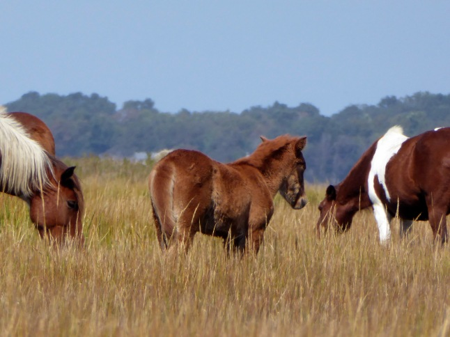 20171005_121757_Young Foal