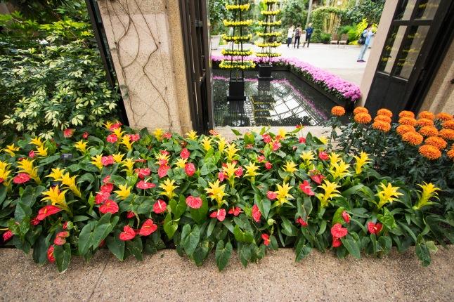 Flower Varieties in Conservatory