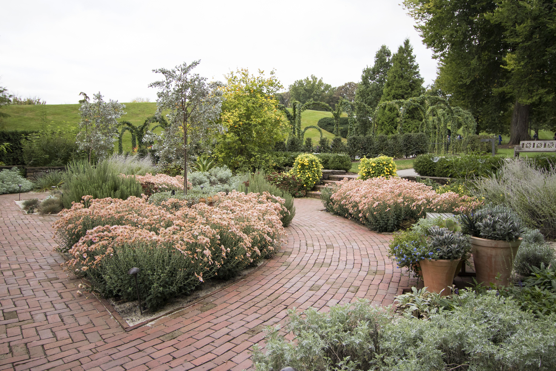 Garden Walk 2017 Highlights: 20171014_173216_Garden Walk