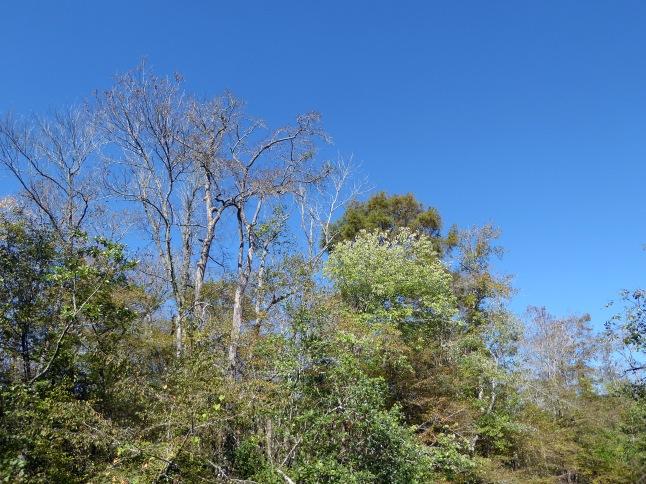 Stately hardwoods lining the creek