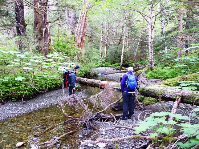 A small salmon stream