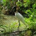 20180224_115928_Jabiru Stork