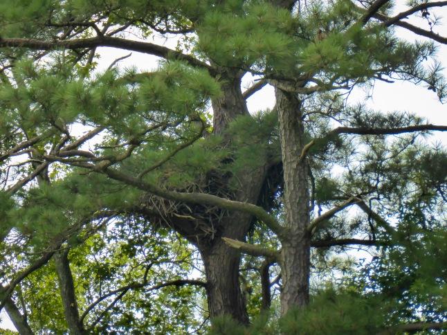 Eagle Nest 1