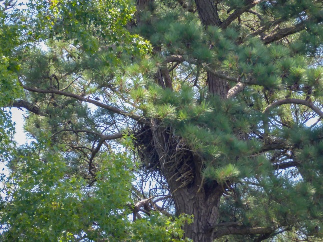 Eagle Nest 2