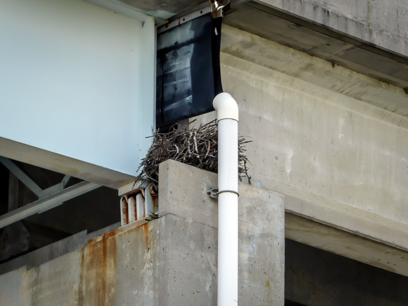 20180903_131733_Osprey nest on Rt 50 bridge